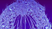Dandelion seeds  by Dan Richards