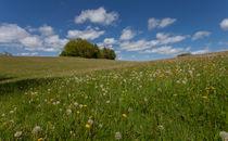 Summer meadow in Wales von Leighton Collins