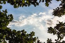 Wolken durchs Geäst by gilidhor