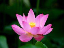 Lotusblüte von Bali von Asri  Ballandat
