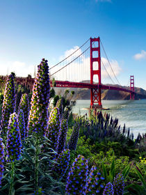 Full Bloom Golden Gate by Sean Davey