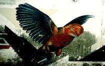Bird by Giorgio Giussani