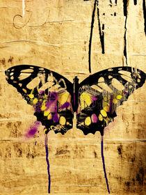 Butterfly by Giorgio Giussani
