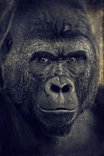 Gorilla by AD DESIGN Photo + PhotoArt