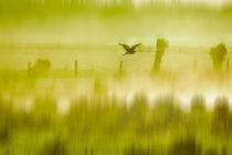 im Morgengrauen  by Barbara  Keichel