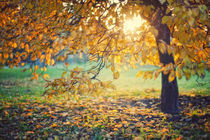 Yellow autumn leaves on a tree and on a ground by Maksym Tarasenko
