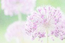 Flowers-coloured-pencil-9