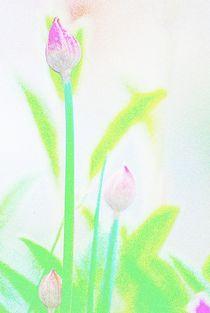 Flowers-coloured-pencil-12