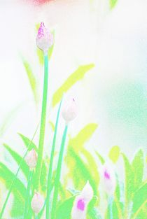 Flowers-coloured-pencil-14