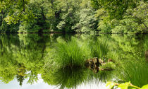 Green-refection