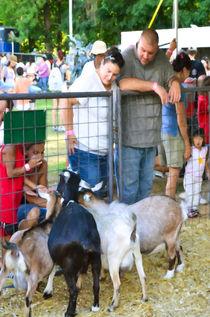 Goats-at-county-fair-1