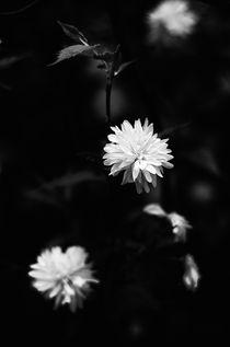 earthly stars one by kwiatek