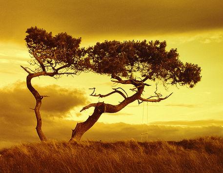 Treedance