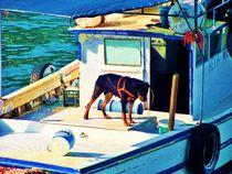 ~ Bootshund ~ von Sandra Vollmann