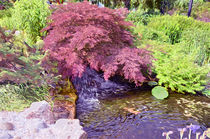 Japanese Garden waterfall von lanjee chee