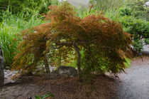 Botanical Garden by lanjee chee