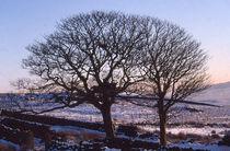 Winter Trees in the Snow von Elizabetha Fox