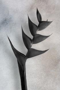 Heliconias-bn-flataf
