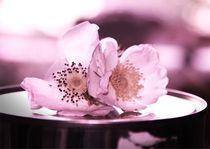 Romantische rosa Rosen by deern-vun-diek