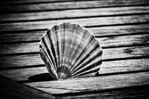 Scallop Shell and Timber by David Hare