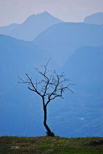 lonely tree... 1 von loewenherz-artwork