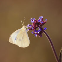 Flower with Butterfly by cinema4design