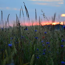 Sommervielfalt by Irmtraut Prien