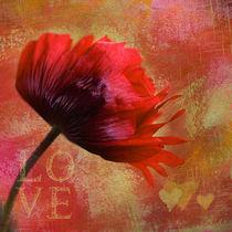 Big Love by Annie Snel - van der Klok