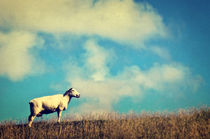 It's a sheep by AD DESIGN Photo + PhotoArt