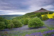 Bluebells at Roseberry Topping by Martin Williams