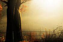 The Golden Glow of  Autumn  by chrissie Judge