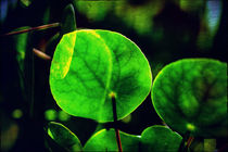 Green by Martina Marten