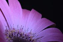 pink von Gisela Peter