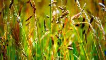 Gräser Mix von peter norden
