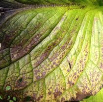 Veins of a leaf. by Ruth Baker