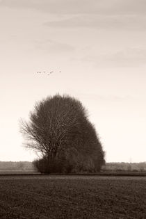 Auf dem Land  by Bastian  Kienitz