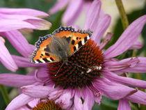 Schmetterling  von Nona Simakis