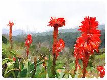 Rote Blütensignale im Garajonay by leoncanarias