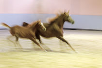 Panning and blurred motion - Horses in speed von paganin