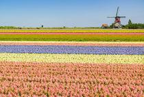 Ultimate Netherlands by Johan Elzenga