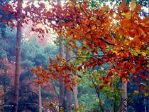 Bunt sind schon die Wälder von barbaram
