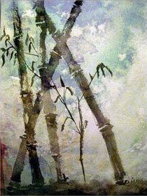 Bambus von barbaram