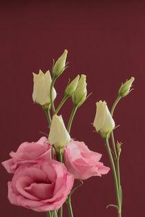 Blütenpracht von Gisela Peter