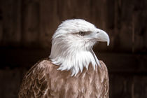 Adler Portrait by airde