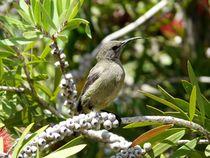 sunbird by moyo