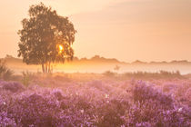 Fog over blooming heather near Hilversum, The Netherlands at sunrise by Sara Winter
