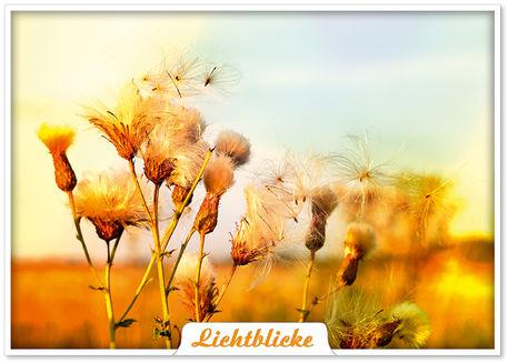 Lichtblicke-pk-hauch-des-lebens-1