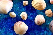 Muscheln auf Glas von Nora DelVerte
