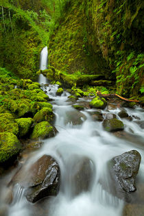 Remote waterfall in lush rainforest, Columbia River Gorge, Oregon, USA by Sara Winter