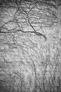 Verzweigungen by Bastian  Kienitz